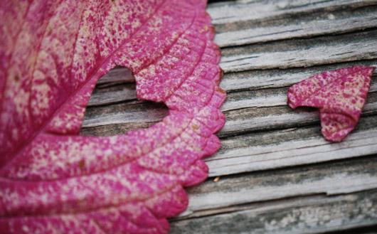 Heart Leaf wallpaper