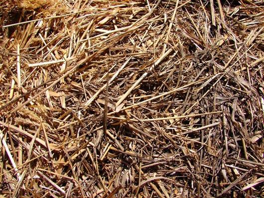 Hay Straw Farm Texture