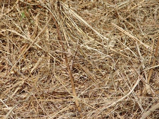 Straw Hay Farm Texture